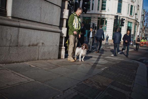 Explosive detection dogs