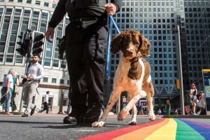 Security dog Marley
